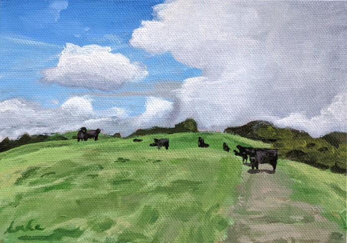 cows on sunset trail